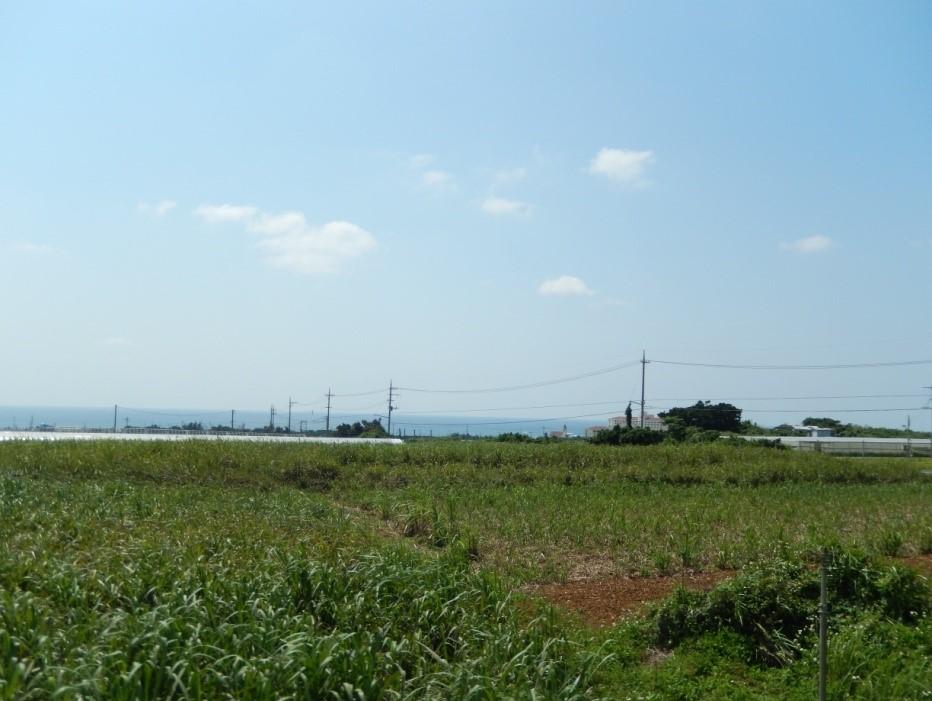 okinawa-ijuu4
