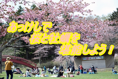 あっけし桜・牡蠣祭り2019の日程と時間を確認!駐車場とアクセスもチェック!